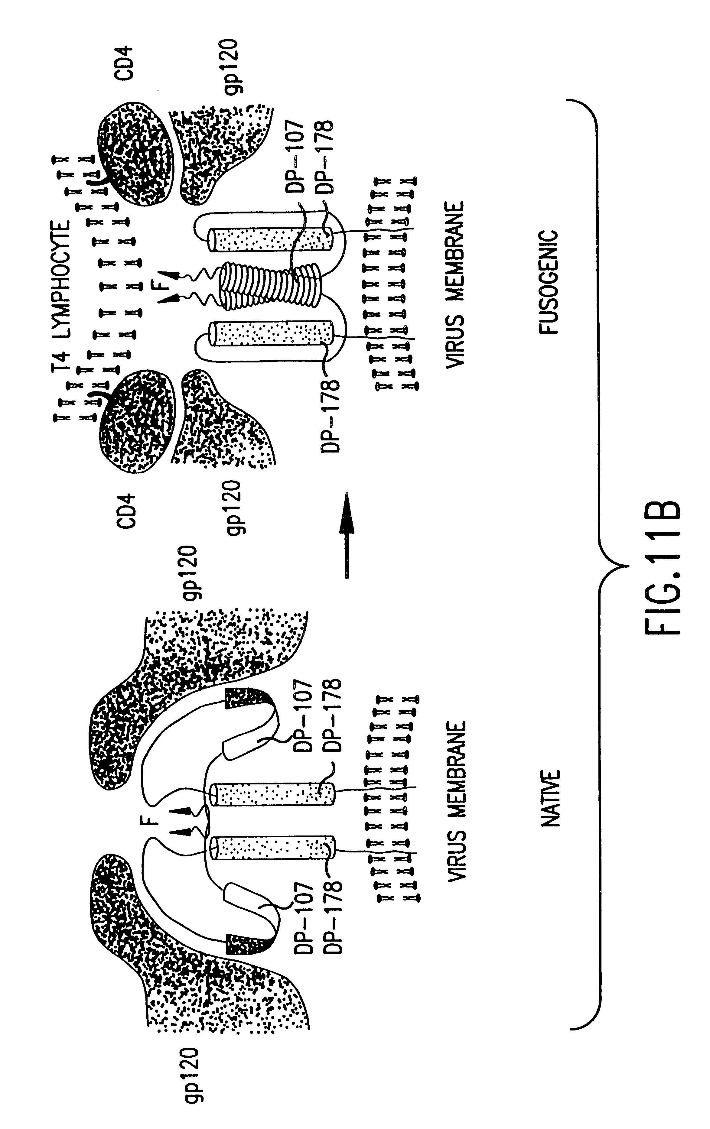 Patent Us 6228983 B1 1989 Volkswagen Fox 18 Fuse Box Diagram Images