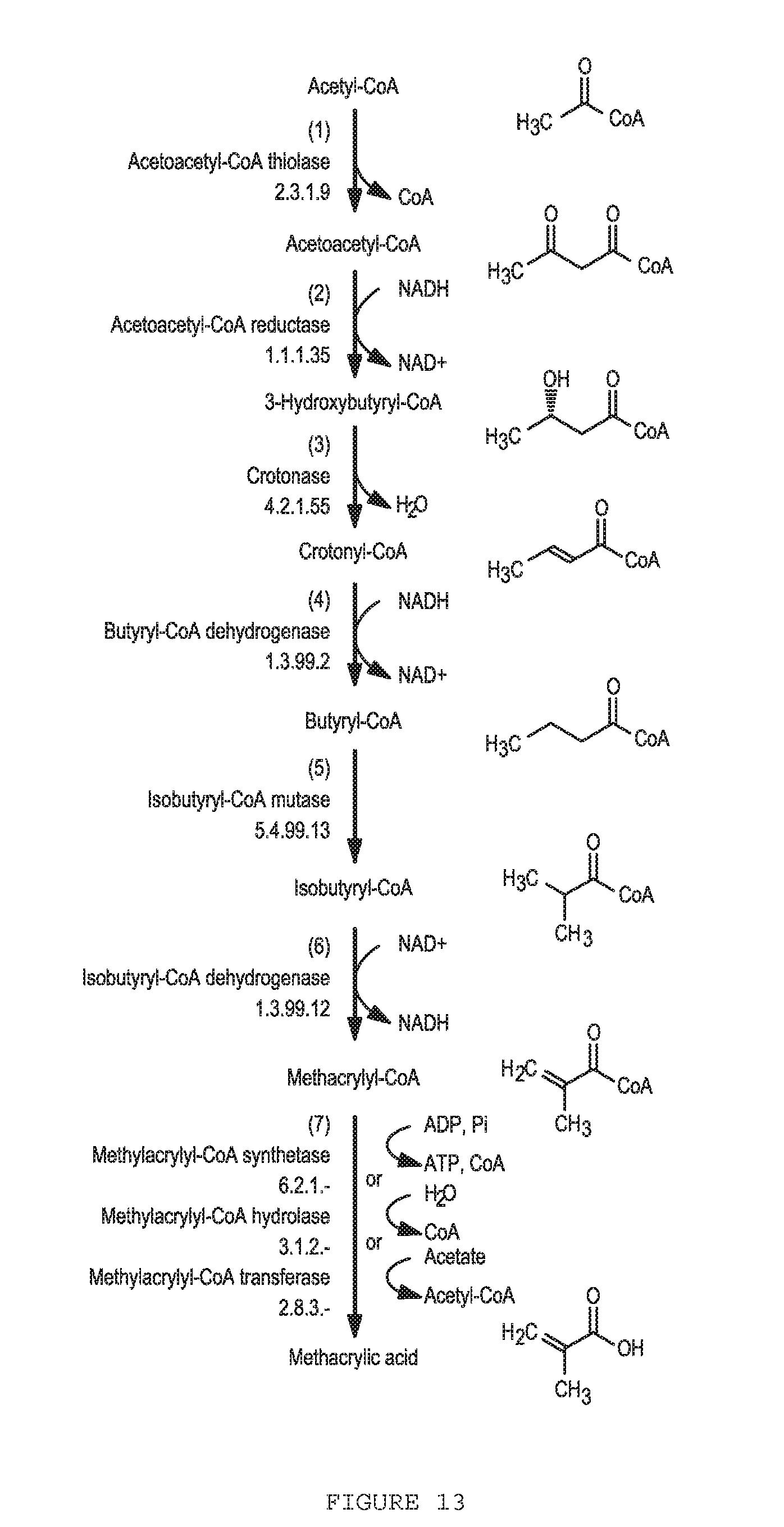 Patent US 9,951,355 B2