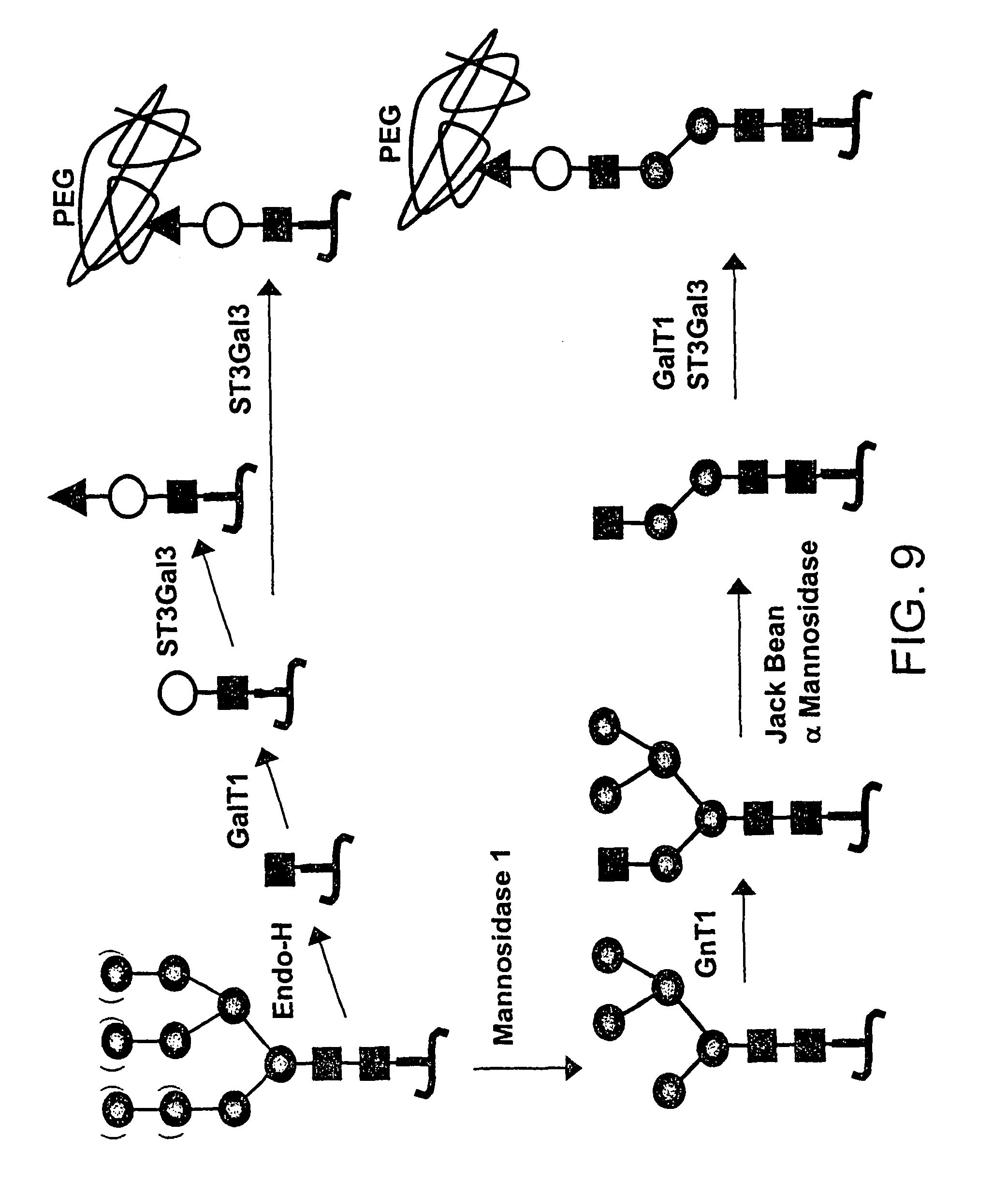 Patent Us 8716240 B2 Back Gt Images For Bean Germination Diagram
