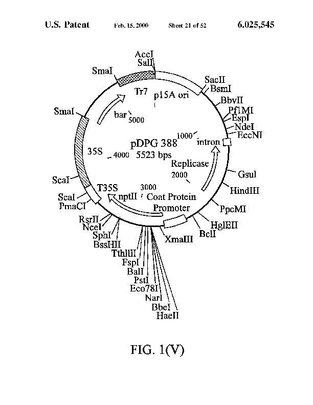 Patent Us 6025545 A